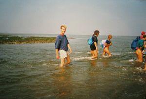 Mudflat hiking - Mudflat waders