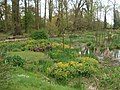 Bog garden at Coughton Court - geograph.org.uk - 466684.jpg