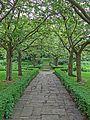 Bolling Hall garden (18346650683).jpg
