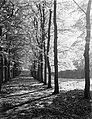 Bomenlaan in de bossen nabij Apeldoorn, Bestanddeelnr 190-1014.jpg