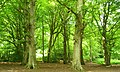 Borthwood Copse - geograph.org.uk - 484352.jpg