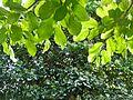 Botanični vrt (3990916566).jpg