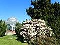 Botanical Garden Berlin 2019-04-16 1131.jpg