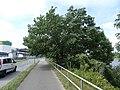 Braudenstraße Pirna (36054109300).jpg