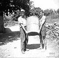 Brenta za grozdje, Erzelj 1958.jpg