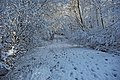 Bridleway in the snow - geograph.org.uk - 1625273.jpg