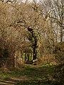 Bridleway to Chudleigh Knighton - geograph.org.uk - 1173127.jpg