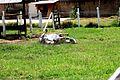 Brincando de Rolar pela grama.jpg