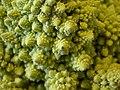 Broccoli DSCN4344.jpg
