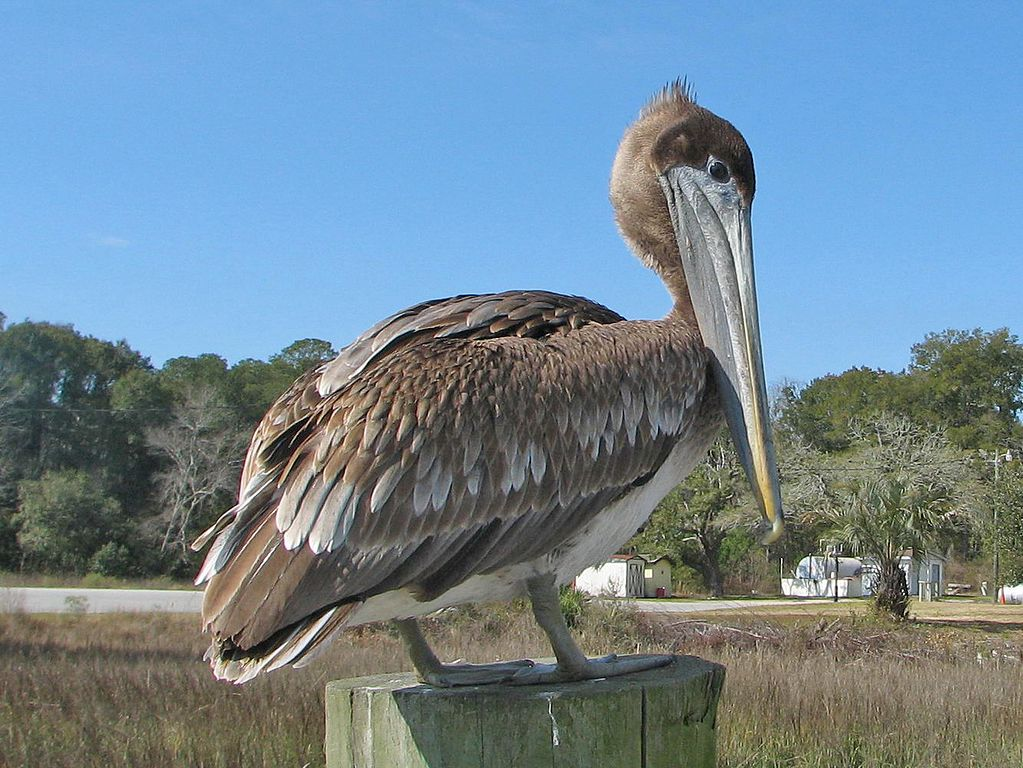Pelican Cafe And Beach Stuart Fl