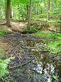 Buchholzer Forst Quelle.JPG