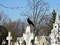 Bucuresti, Romania, Cimitirul Bellu Catolic, (O mica cioara neagra pe o cruce alba).JPG