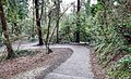 Bushy Park, Dublin -146428 (31538438507).jpg