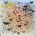 By ovedc - Steinhardt Museum of Natural History - 22.jpg