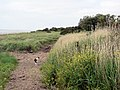 By the Solway Firth south of Dornock - geograph.org.uk - 482917.jpg
