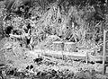 COLLECTIE TROPENMUSEUM Het wassen van sago in West-Ceram. Op de achtergrond twee 'toemangs' uit sagobladeren en rotan gemaakte manden waarin het sagomeel wordt vervoerd naar Ambon en andere gebieden TMnr 10011234.jpg