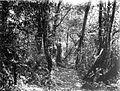 COLLECTIE TROPENMUSEUM Hoofdpad door het oerwoud achter het huis van de heer Wouters Plantentuin van Tjibodas West-Java TMnr 60013636.jpg