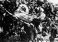 COLLECTIE TROPENMUSEUM Python reticulatus TMnr 10006436.jpg