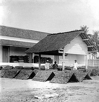 Bojonegoro Regency - Drying tobacco leaves in Bojonegoro during colonial period.