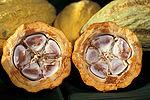 Penampang lintang buah kakao. Plasenta berada di tengah, diapit oleh karangan biji.