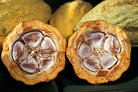 Description: Cocoa beans in a cocoa pod. Sourc...