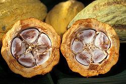 http://upload.wikimedia.org/wikipedia/commons/thumb/0/01/Cacao-pod-k4636-14.jpg/250px-Cacao-pod-k4636-14.jpg
