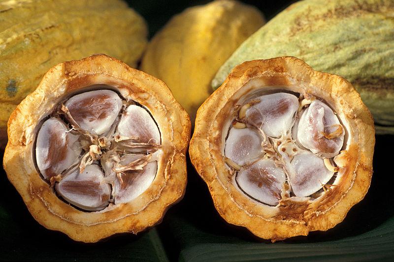 Cocoa beans in a cocoa pod.