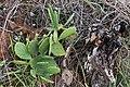 Cactus Red Cliffs of Scarborough-2+ (2517387585).jpg