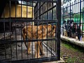 Caged (7492115944).jpg