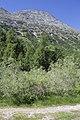 Camping Morteratsch - panoramio (2).jpg