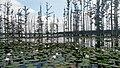 Cane Creek State Park 015.jpg