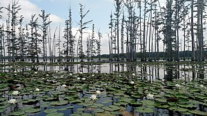 Lincoln County, Arkansas - Lily pads and a cypress grove on the lake in Cane Creek State Park