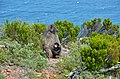 Cape Point, Cape Town, South Africa - panoramio (10).jpg
