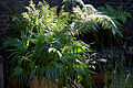 Capel-Manor-Gardens- potted plants.jpg