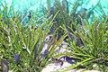 Capetown - Two Oceans Aquarium IMG 9454.JPG