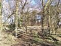 Carr Moor Plantation - geograph.org.uk - 143944.jpg