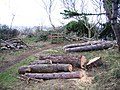Casualties of the Storm - geograph.org.uk - 339886.jpg