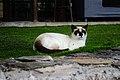 Cat in the grass of Hotel Rural Maipez 04.jpg