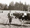 Cattle, kid, shepherd, herdsboy Fortepan 92298.jpg