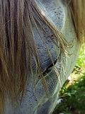 Cavallo - ciglia.jpg