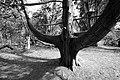 Cedar grove (33157451580).jpg
