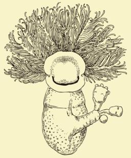 Cephalodiscus dodecalophus McIntosh
