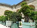 Château de Versailles orangerie grenadiers en fleurs.jpg