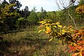 Chêne à Fontenelay.jpg