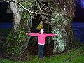 Chêne du Pouldu 2002 Bretagne.jpg