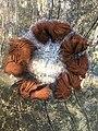 Champignon saprophyte.jpg
