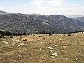 Chemin Ramadé de Campmagre le long de la crête des Esquerdes de Rotja - panoramio.jpg