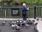Child proof fence.jpg