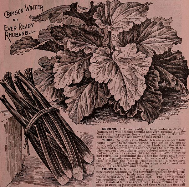File:Childs' rare flowers, vegetables, and fruits (1903) (20418777260).jpg