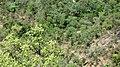 Chinnar Wildlife Sanctuary - panoramio (16).jpg